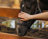 woman hand caress horse on head