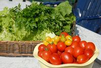 Tomaten Kräuter