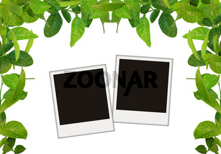green leaves frame with blank photos