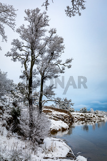 Reflections in the water. Beautiful winter day at Odderoya in Kristiansand, Norway. Trees covered in snow.