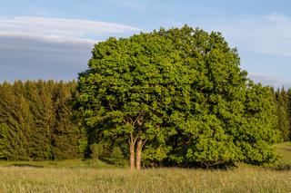 Harzlandschaft Wiese und Wald