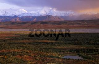 Alaskakette und herbstliche Tundra im Abendlicht / Denali Nationalpark  -  Alaska