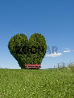 Herzförmiger Busch