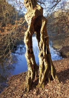 RS_Baum an der Wupper_05.tif