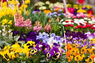 Blumen auf dem Markt, flowers on a market