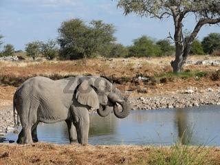 Elefanten am Wassser