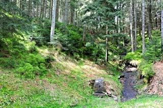 Quellgebiet der Rotmurg mit Brunnen im Schwarzwald