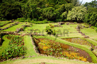 Example of terraced gardens in Kauai showing different plant types