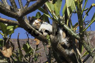 Katze im Tempelbaum ruhend.