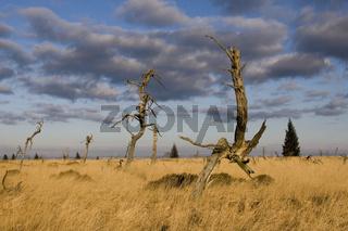 Abgestorbene Baeume, Naturpark, Hohes Venn, Noir Flohay, Belgien, dead trees, natural park, high-fens, belgium