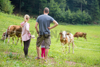 Family on a hike observing and caressing pasturing cows on meadow.
