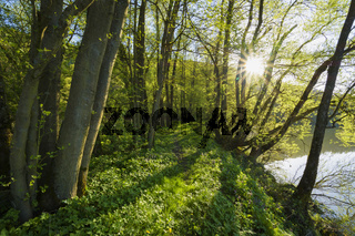 Away on riverside in spring with sun