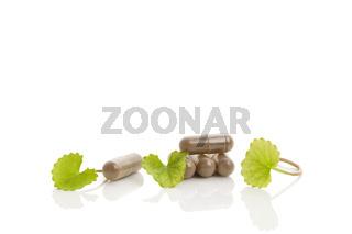 Green Gotu kola medicine