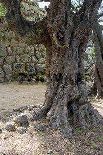 Nuraghe Albucciu bei Arzachena, Sardinien