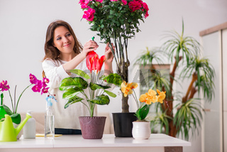 The young woman looking after plants at home