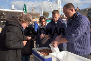 Krabben fangfrisch vom Kutter, Husum, Nordfriesland, Schleswig-Holstein, Norddeutschland, Europa