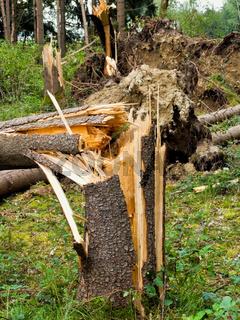 Sturmschaden. Bäume im Wald nach Sturm.