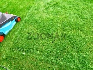 Rasenpflege vom englischen Rasen