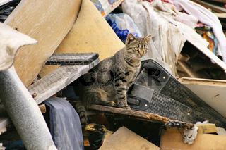 Katze auf einer Mülldeponie - cat on a garbage depot