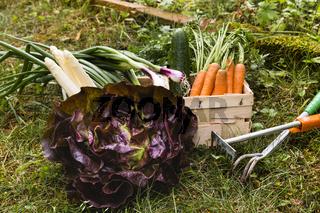 Gemüseernte, harvest of vegetable