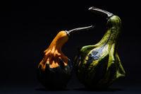 Decorative pumpkin isolated on black background