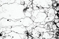 Black and white marble texture background, abstract background pattern with high resolution ,invert color and selective focus.