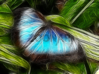 blauer morphofalter Schmetterling