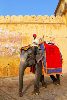 Decorated elephant going on the cobblestone path from Amber Fort near Jaipur, Rajasthan, India
