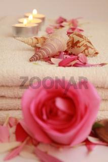 rose und muscheln