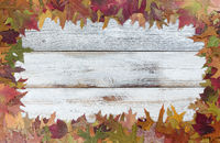 Autumn foliage background for seasonal holidays on white rustic wooden boards
