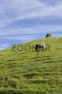 Landschaft in blau und gruen