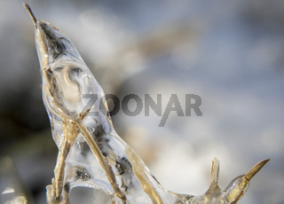 Dried twigs encased in a layer of ice