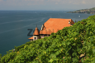 Weinguts Clos des Abbayes im Lavaux am Genfersee