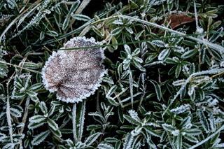 Frost auf der Wiese mit Blatt