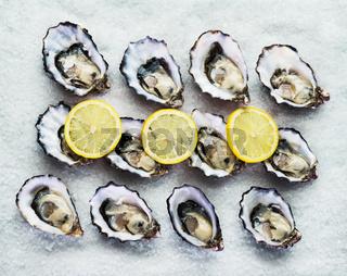 dozen fresh oysters
