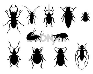 Käfer Sammlung