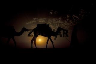 Ein Beduine mit Kamel in der Wueste im Grossen Oestlichen Erg der Sahara bei Douz im sueden von Tunesien