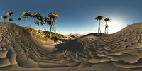 panorama of palms in desert. made with the one 360 degree lense camera without any seams. ready for virtual reality