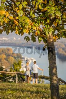herbstliche Szenerie oberhalb des Rheins bei Rüdesheim am Rhein, Weinstadt in Deutschland