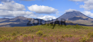 Tongariro Nationalpark, die beiden Vulkane Mount Tongariro und Mount Ngauruhoe erheben sich aus einer mit bluehendem Heidekraut uebersaeten Ebene, Tongariro Nationalpark, Nordinsel, Neuseeland, Tongariro National Park, volcanoes Mount Tongariro on the lef