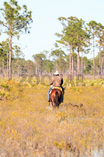 Cowboy herds his cattle through marshland