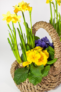 Korb mit Blumen, basket with flowers
