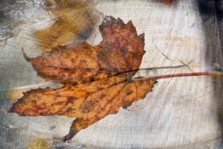 Herbstblatt mit Holztextur