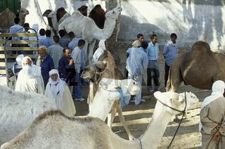 Der Markt in der Oase von Douz im sueden von Tunesien