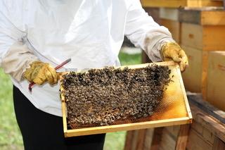 Imker überprüft einen Bienenstock