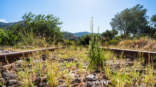 green grass in old railroad in Sicily