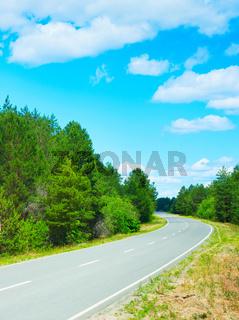 Forest asphalt road