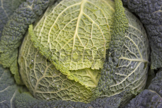 Wirsingkopf / green vegetables
