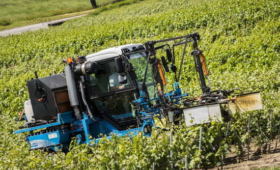 Nesle-le-Repons Vineyards