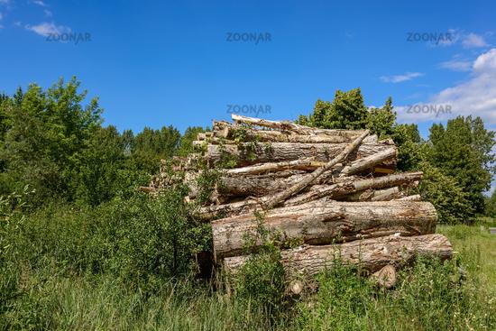 Holzstapel im Naturschutzgebiet Röntgental bei Berlin